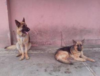 牧和邻宠物店