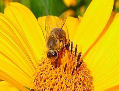嘟真蜂蜜加盟 嘟真蜂蜜