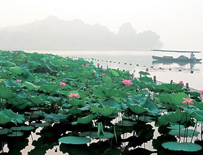 红莲湖度假村加盟 红莲湖度假村