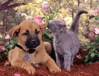 极度宠物店加盟 极度宠物