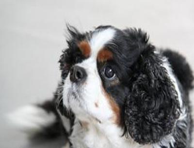 查尔斯宠物店加盟 查尔斯宠物