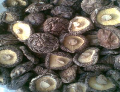宏情香菇加盟