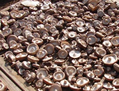 徽王香菇加盟 徽王香菇