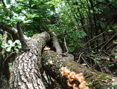 宏情香菇加盟 宏情香菇