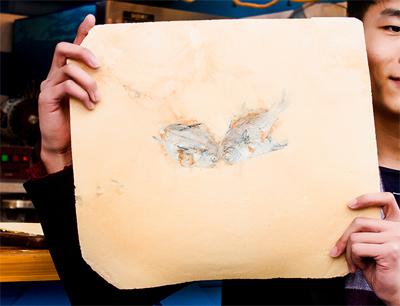 海龙王海鲜化石煎饼加盟 海龙王加盟