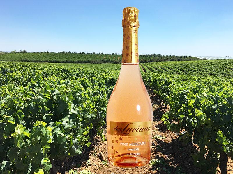 法国吉洛酒庄加盟 1