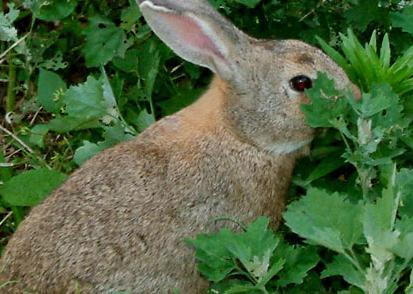 农福生野兔养殖