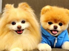 宠艺宠物美容学校加盟