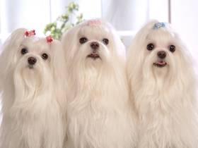 宠物美容培训学校加盟